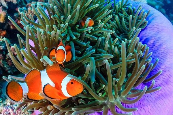 Cá Hề - Đặc điểm, tập tính, giá bán và cách nuôi cá khỏe - 6