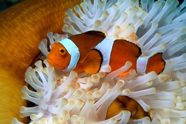 Cá Hề - Đặc điểm, tập tính, giá bán và cách nuôi cá khỏe - 8