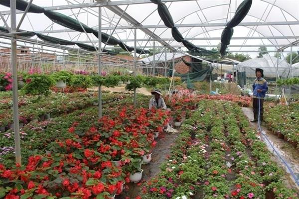 Ý nghĩa hoa Trạng Nguyên và cách trồng, chăm sóc đúng nhất - 6