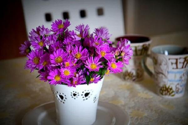 Hoa Thạch Thảo - Đặc điểm, ý nghĩa, cách trồng và cách cắm hoa đẹp - 6