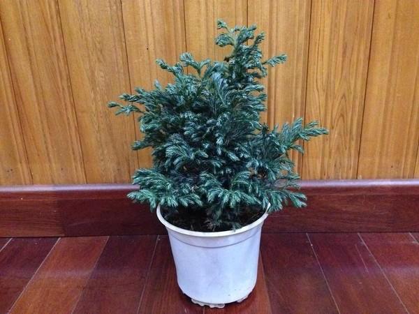 15+ Cây trồng trong nhà tốt nhất cho sức khỏe và phong thủy - 12