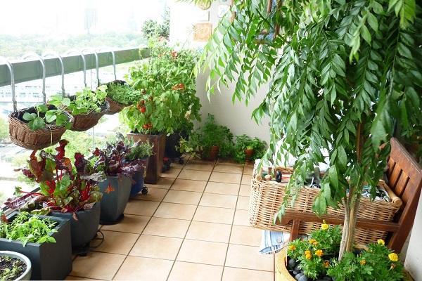 Top 10 cây trồng ban công đẹp chịu nắng, dễ trồng và chăm sóc - 1