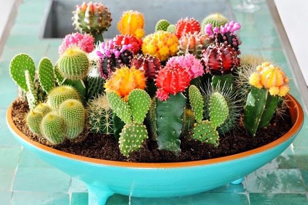 Top 10 cây trồng ban công đẹp chịu nắng, dễ trồng và chăm sóc - 5
