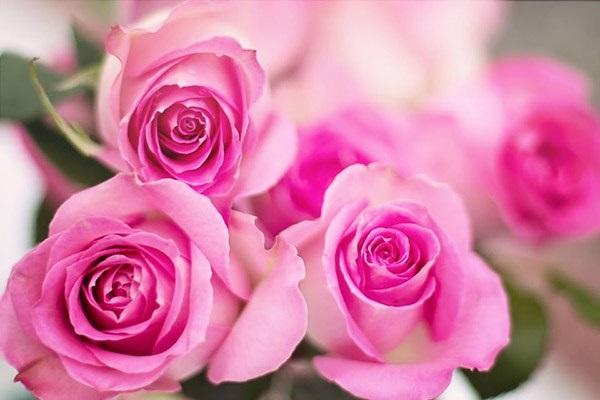 Hướng dẫn cách cắm hoa ngày Tết đẹp để rước tài lộc, may mắn - 6
